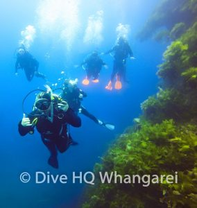 Diving in Northland